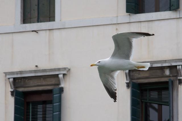 Italy Venencia #1 7