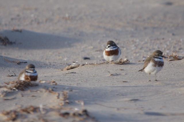 Shoalhaven Heads Birds 32