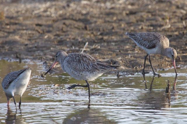 Shoalhaven Heads Birds 24