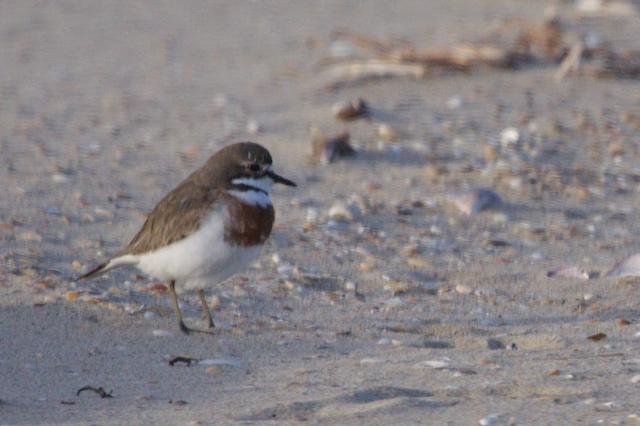 Shoalhaven Heads Birds 35
