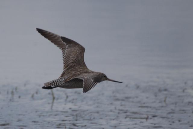 Illawarra Birds # 2 24