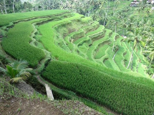 Bali Apr 2012 100s # 2 16