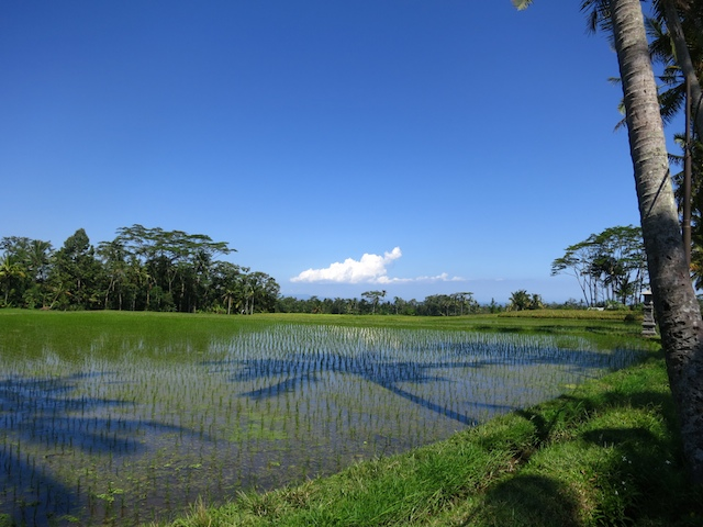 Bali Apr 2012 100s # 4 78