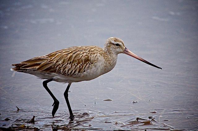Illawarra Birds # 2 17